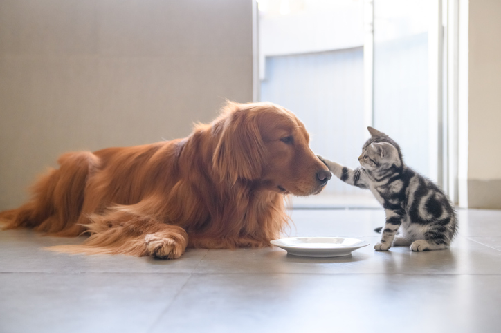 Why Pet Owners Should Consider Buying Insurance